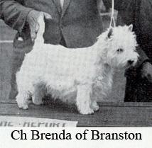 Чемпион Бренда из Бранстона