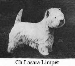 Чемпион Ласара Лимпет